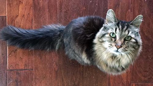 美26岁猫咪成全球最长寿宠物猫相当于人类124岁