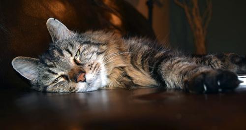 美26岁猫咪成全球最长寿宠物猫 相当人类124岁