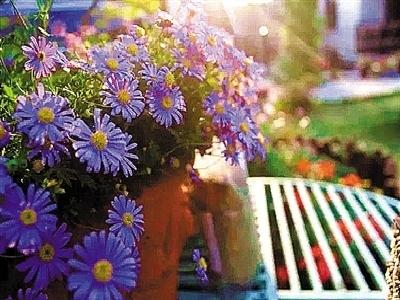窗台上放排花 让你家成为风景线
